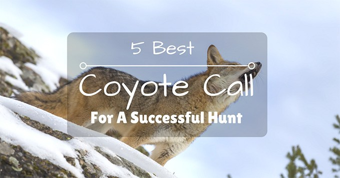 Best Coyote Call