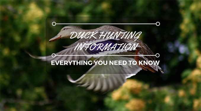 Duck Hunting Information