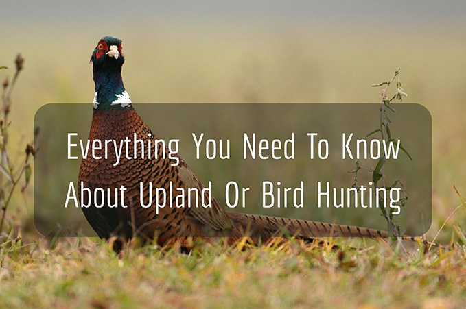 Everything You Need To Know About Upland Or Bird Hunting
