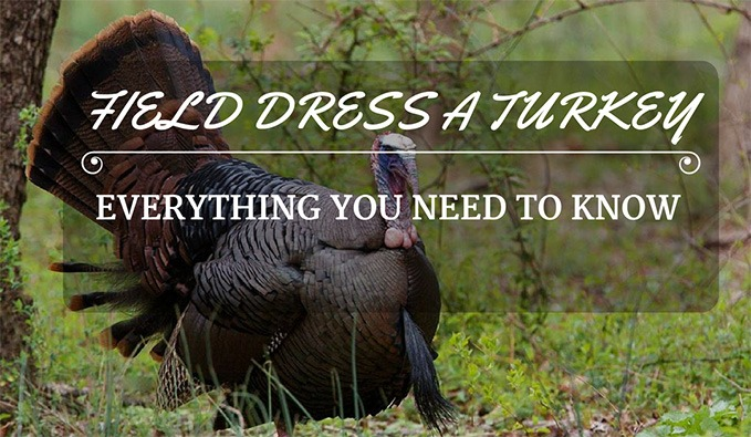 How to field dress a turkey