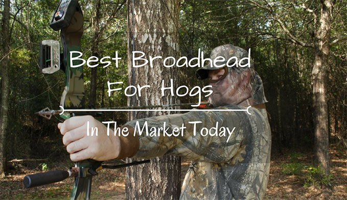 Top 5 Best Broadhead for Hogs Reviews 2017 - StayHunting.com