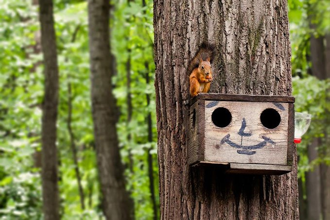 squirrels boxes