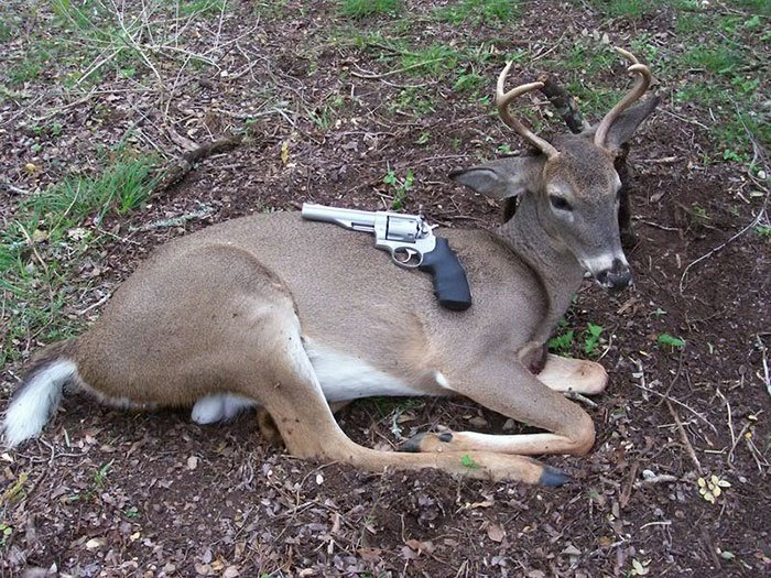 Handgun Deer Hunting