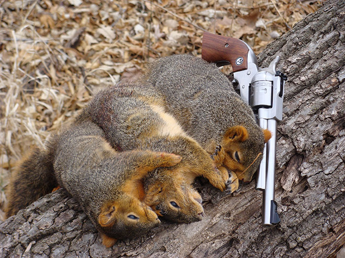 Squirrel Pistol Hunting