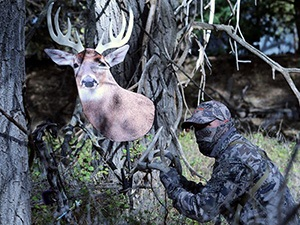 Whitetail Buck Decoy from HeadsUpDecoy